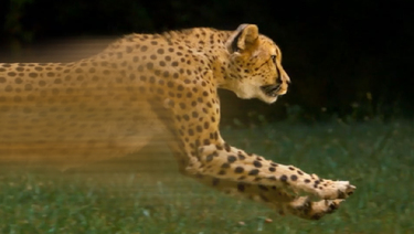 Fast Home Loans - still image of cheetah running so fast that it appears blurred.